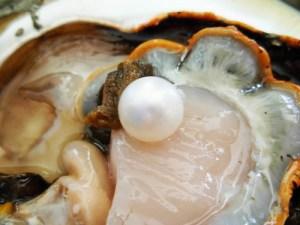 come_si_forma_una_perla