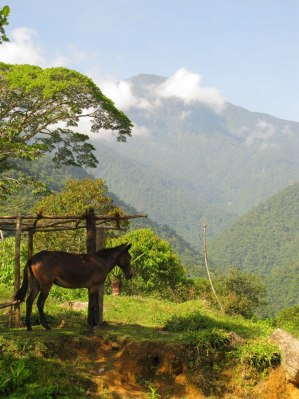 View on the Lost City hike, Colombia