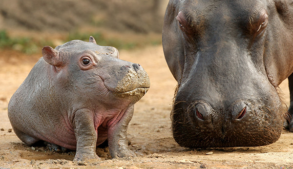 Cute Baby With Parents Wallpaper 25 Animals Without Necks The Results Are Hilarious
