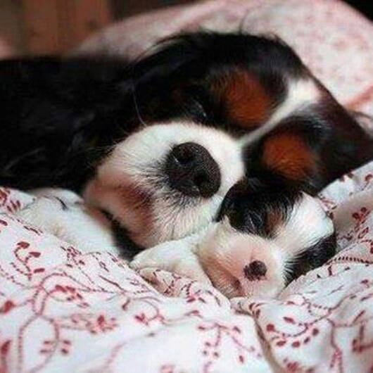 Cute Babies Wallpaper With Tears Mom And Baby Dogs Snuggling Cute Dogs Sleeping