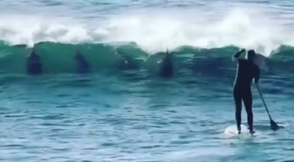 Dolphins \u0027Prank\u0027 Paddle Boarder And We Can\u0027t Stop Laughing