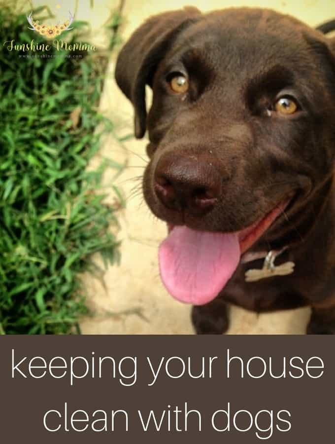 Keeping your house clean with dogs