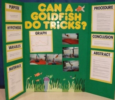 Science Fair / Poster Board Directions - project poster board