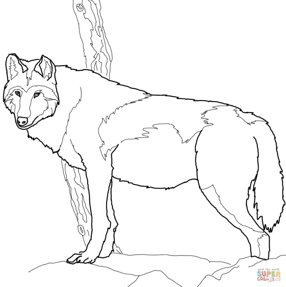 Arctic wolf coloring pages - digitalspace.info