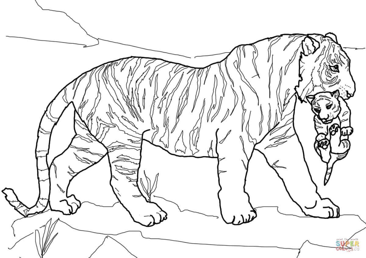 Coloring pages tiger - Coloring Pages Tiger