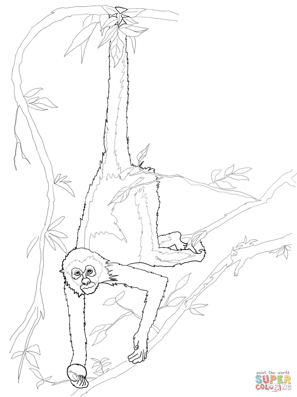 Spider Monkey Coloring Page - Eskayalitim