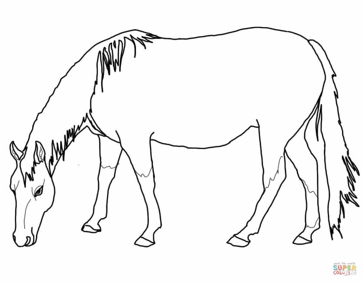 coloring pages horses grazing american quarter horse download