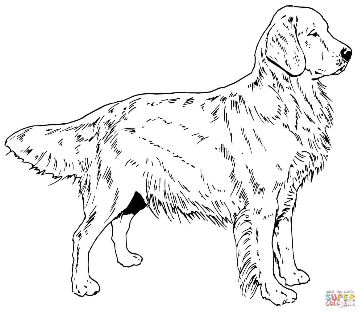 Click the golden retriever dog coloring