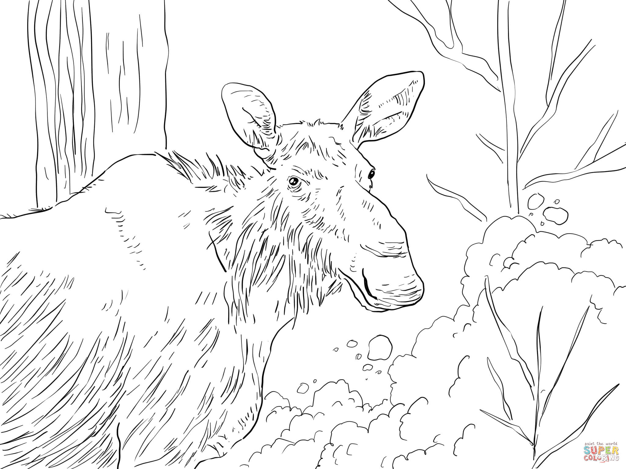 Moose Animal Coloring Pages Gianfreda Net