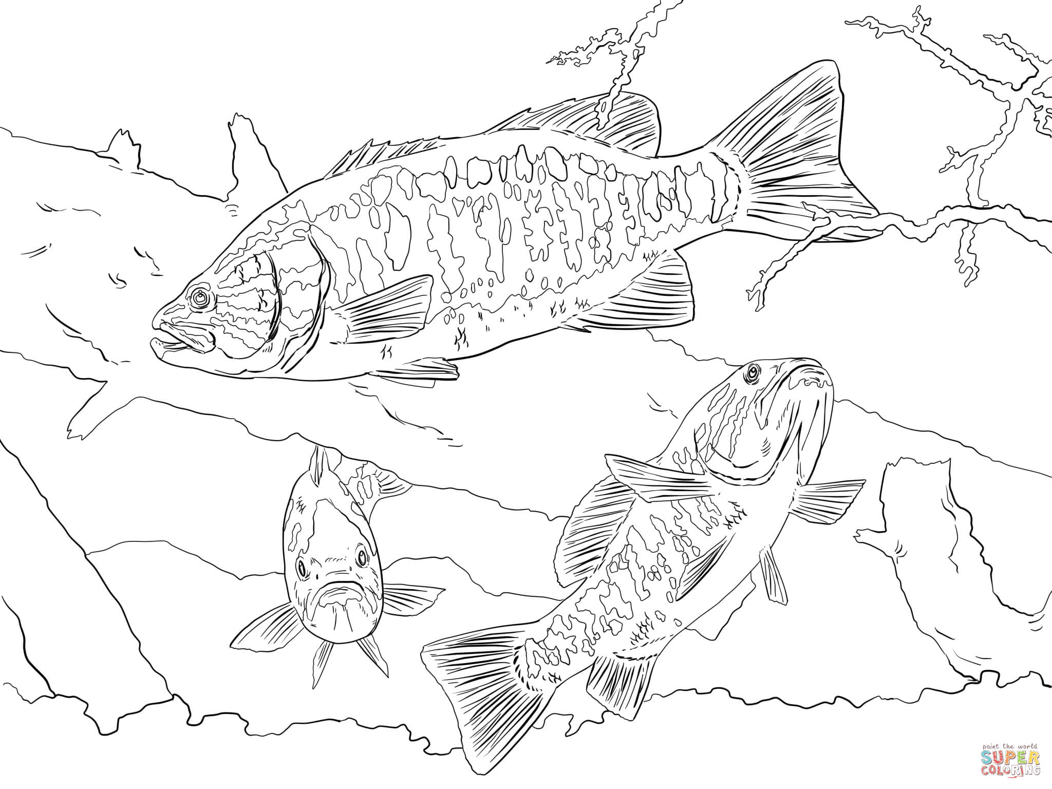 Click the smallmouth bass coloring pages