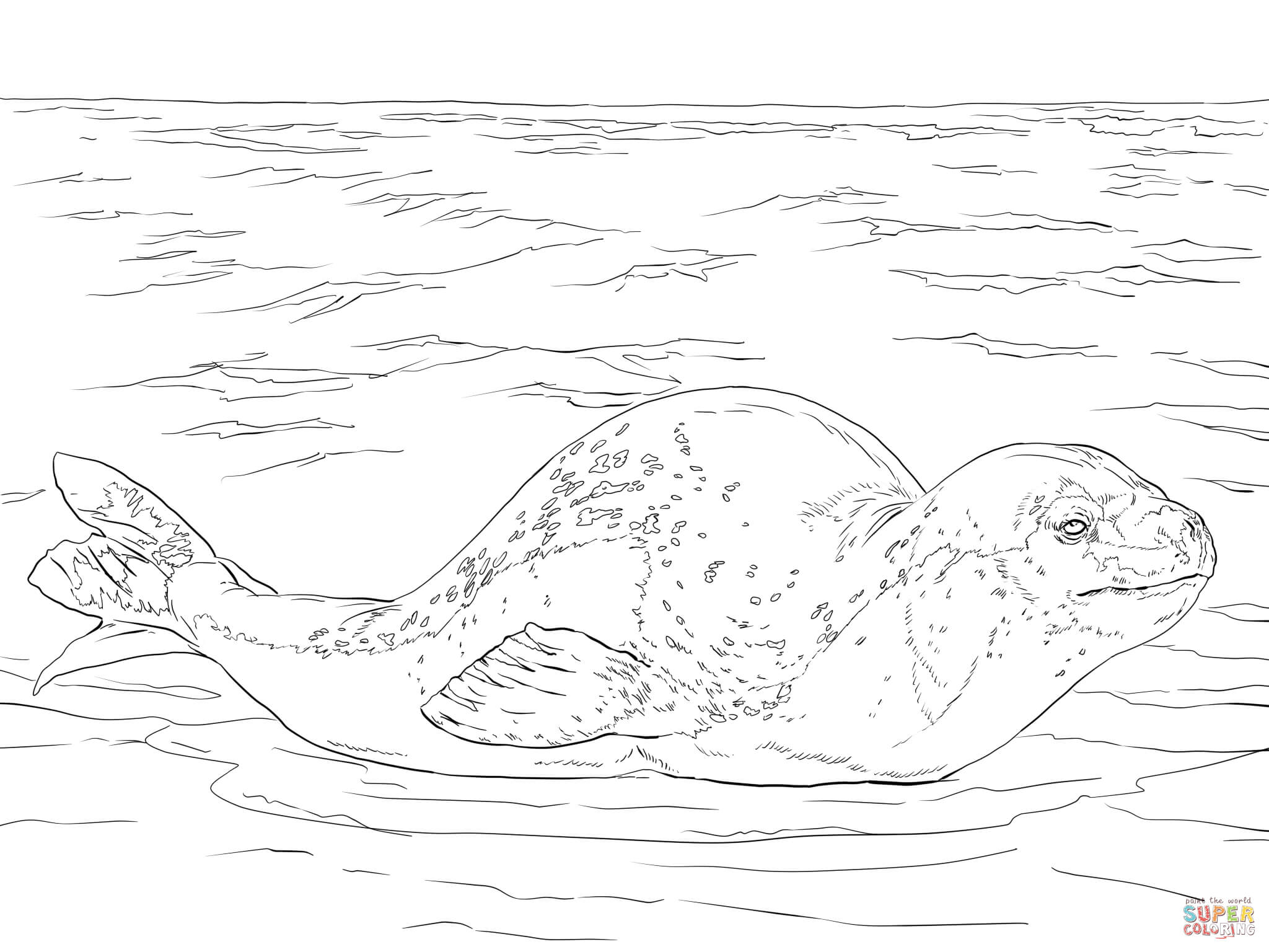 Leopard Seal Coloring Pages Eskayalitim Walrus Diagram Pinnipeds Pinterest Anatomy And Google How To Draw A