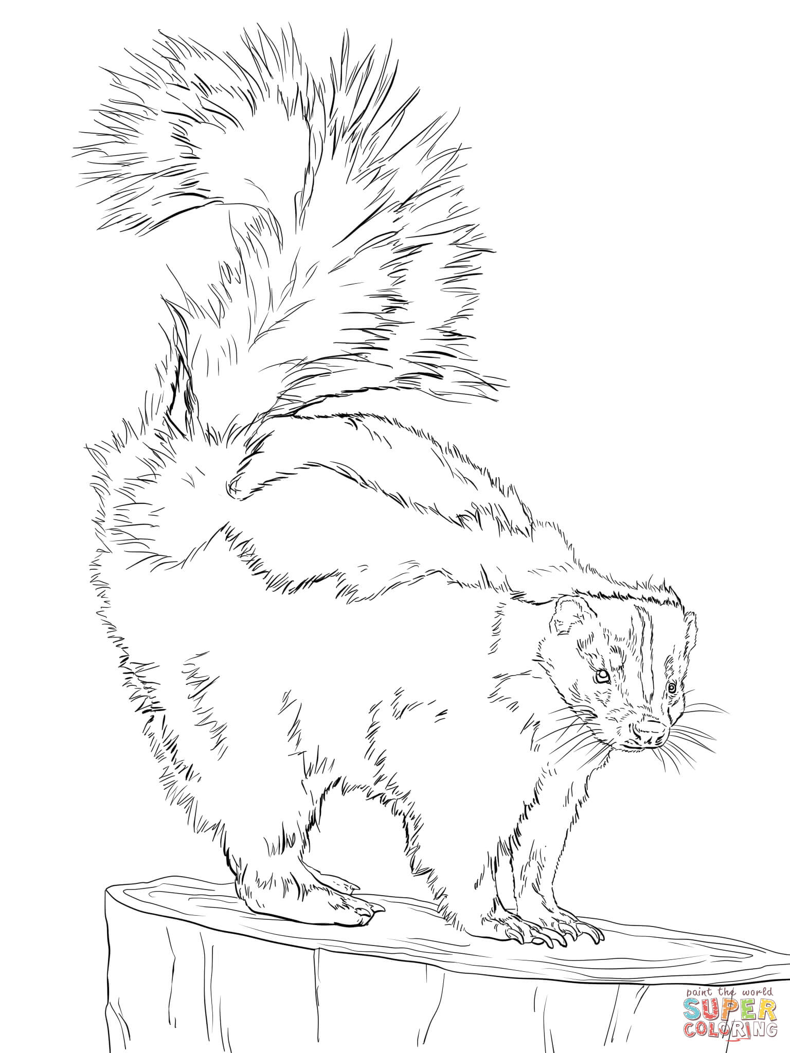Skunk Coloring Page Federalgrantsource