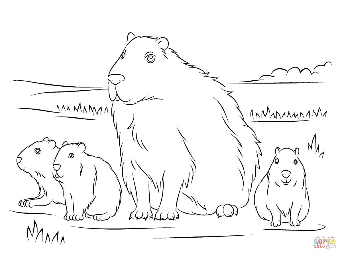 Capybara Coloring Page - Eskayalitim