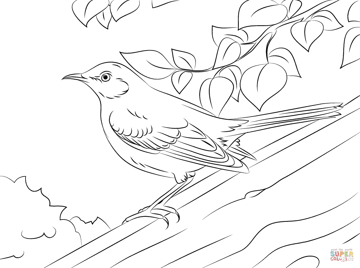 Northern Mockingbird Drawing Wwwpixsharkcom Images