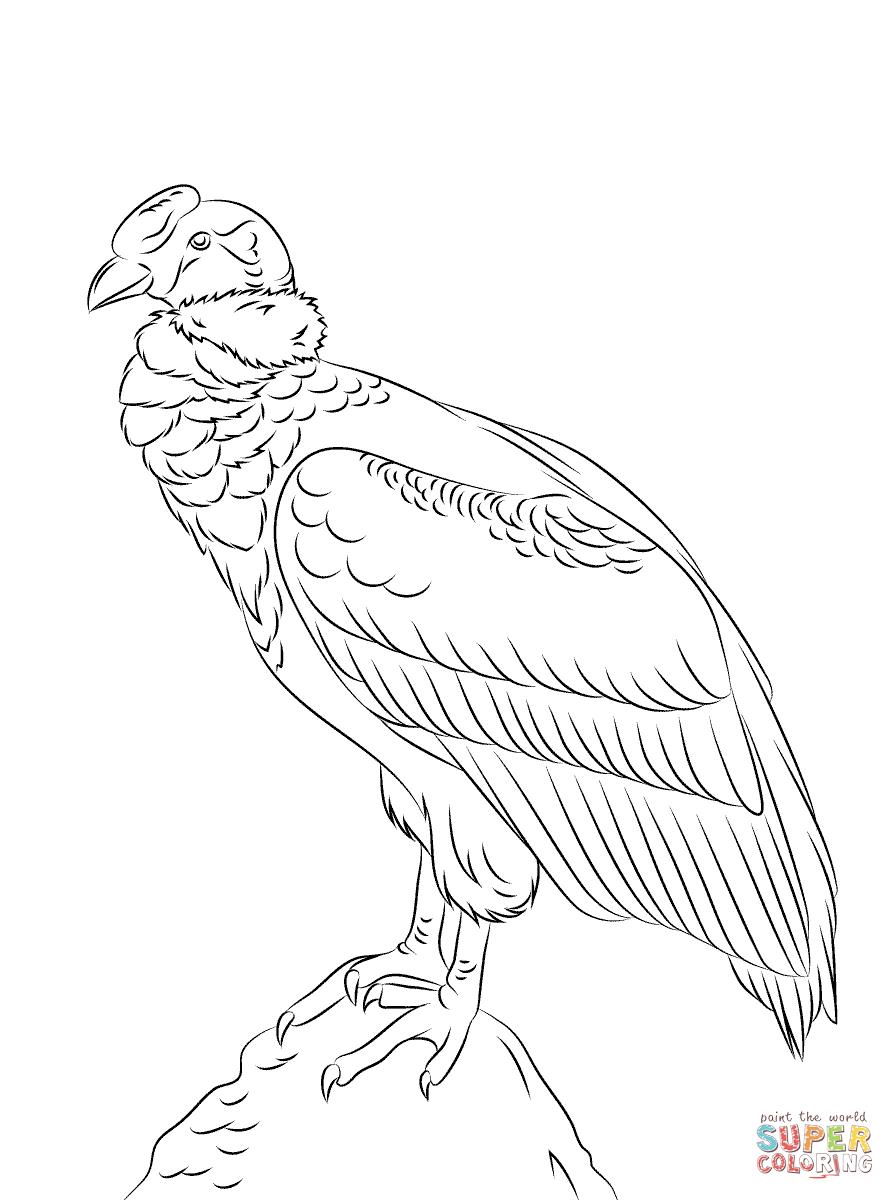 andean condor diagram