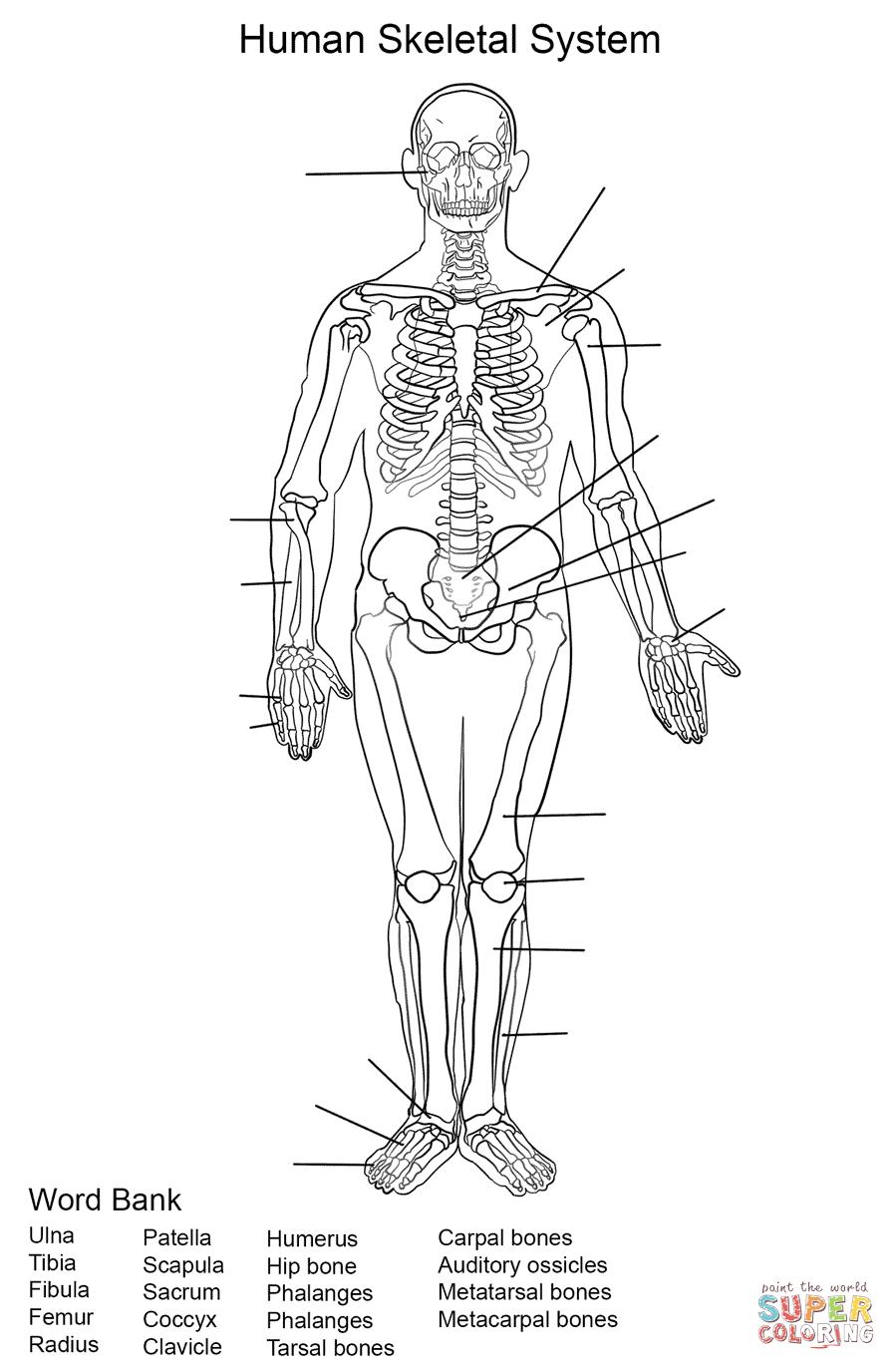 skeletal system diagram games