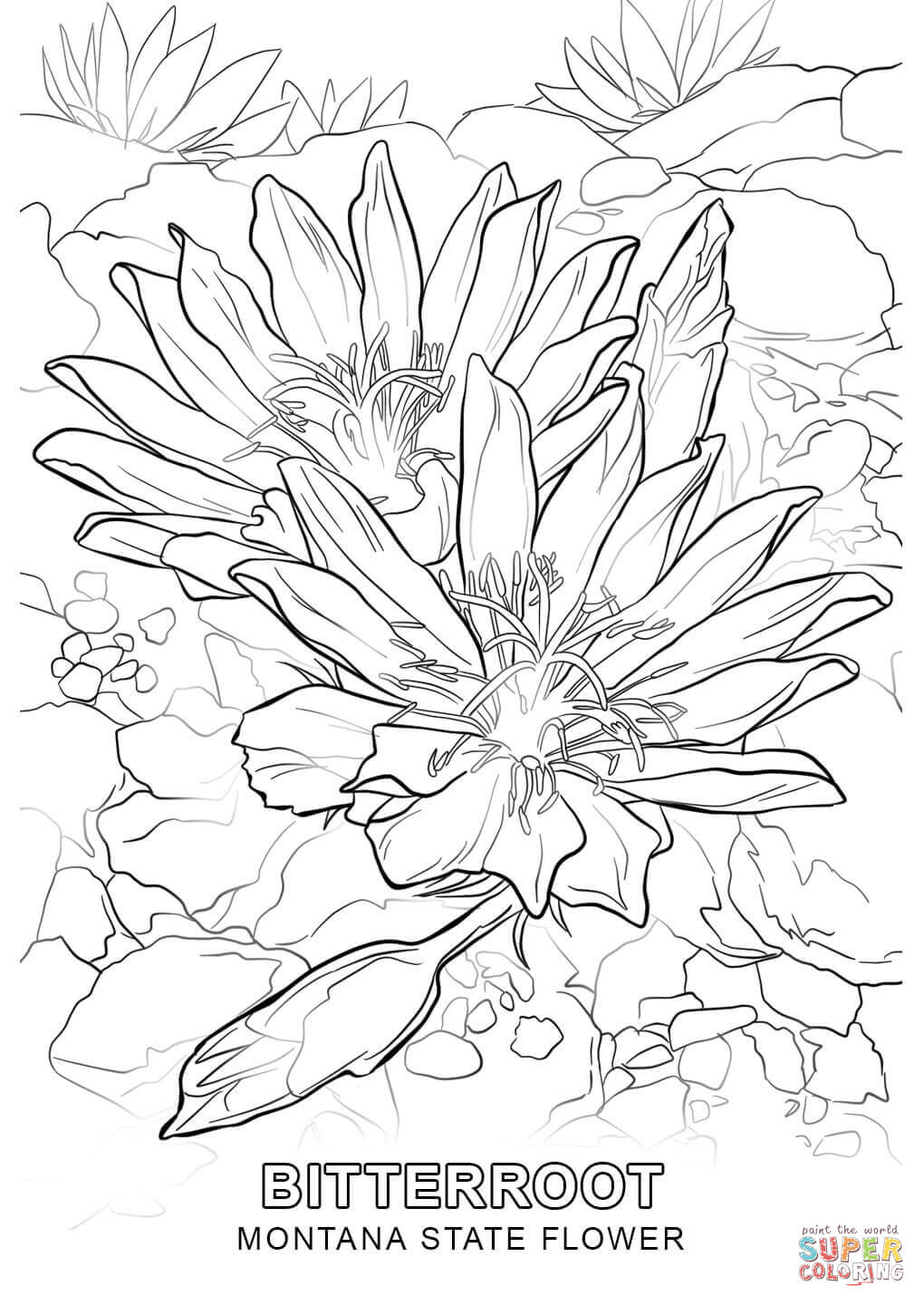 Click the montana state flower coloring pages