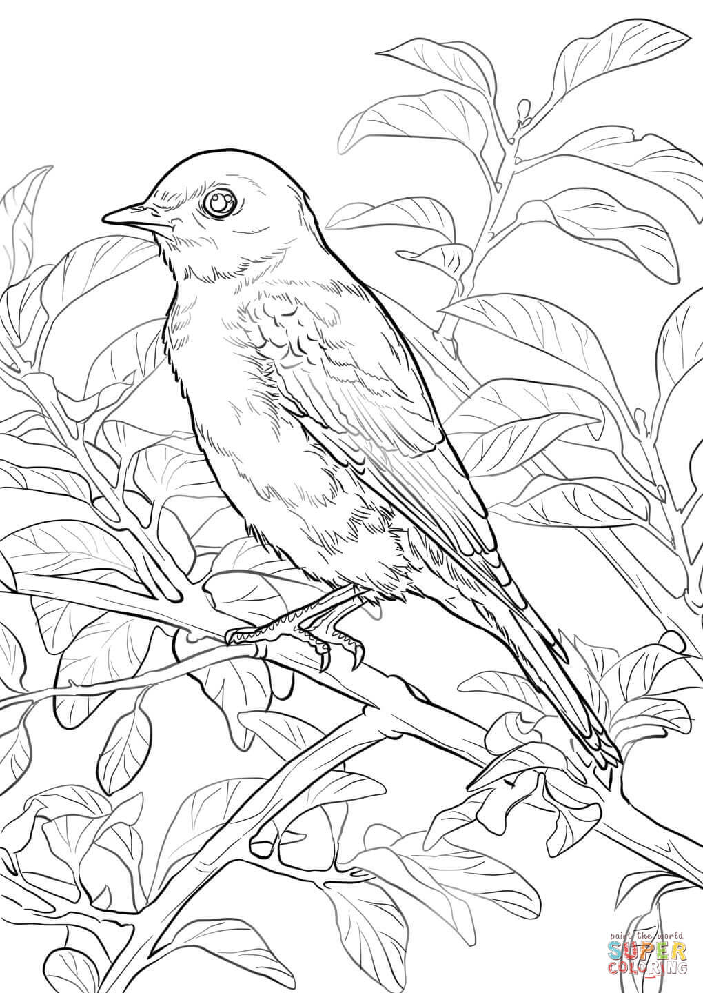 eastern blue birds on barbed wire coloring page