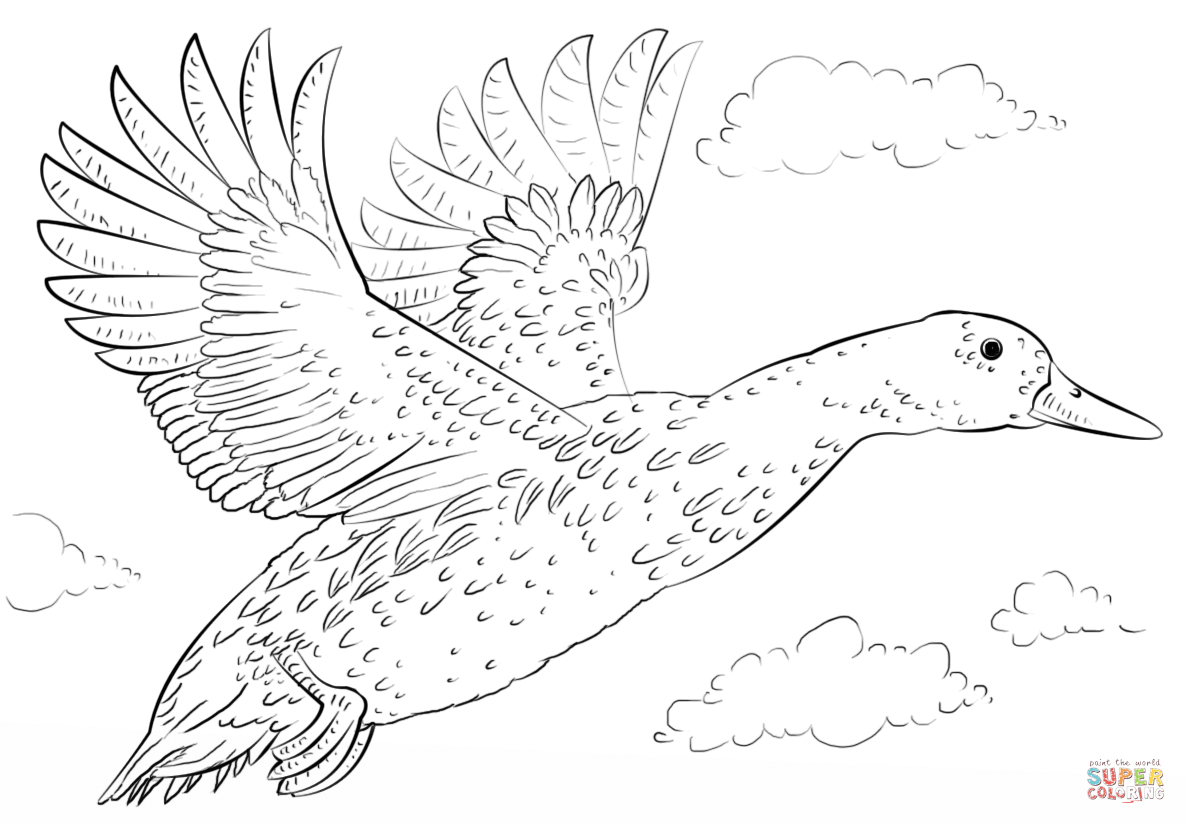 free coloring pages ducks