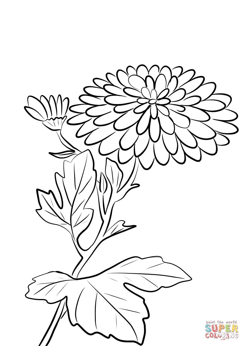 Chrysanthemum Coloring Page - Eskayalitim