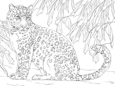 Cute Leopard Gecko Wallpaper Ausmalbild Amurleopard Ausmalbilder Kostenlos Zum