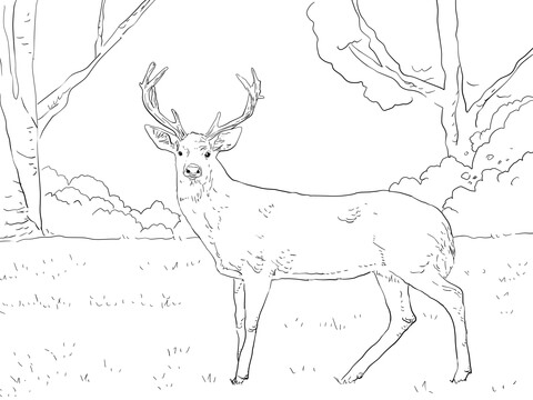Deer Coloring Pages Coloringstar Grig3org