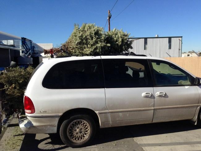 Minivan_Trees