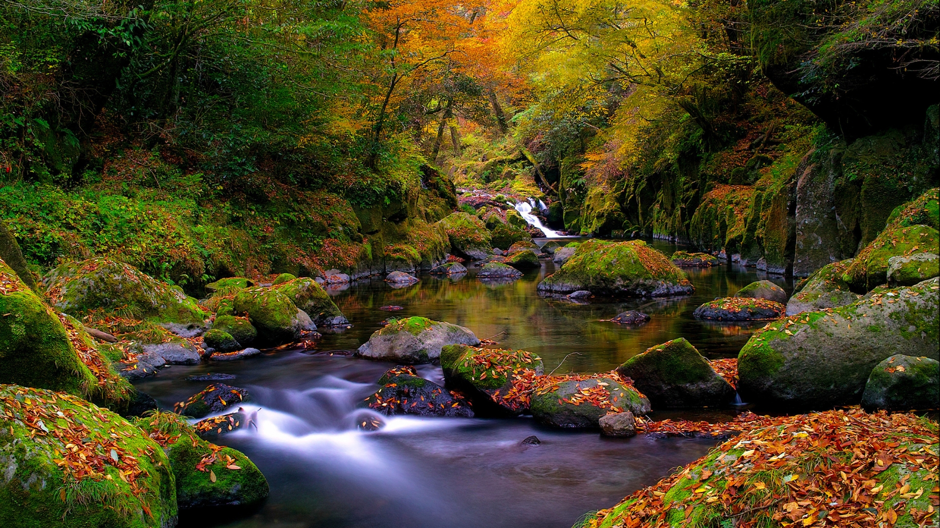 3d Funny Cartoon Wallpapers A Beautiful Autumn Landscape In The Forest