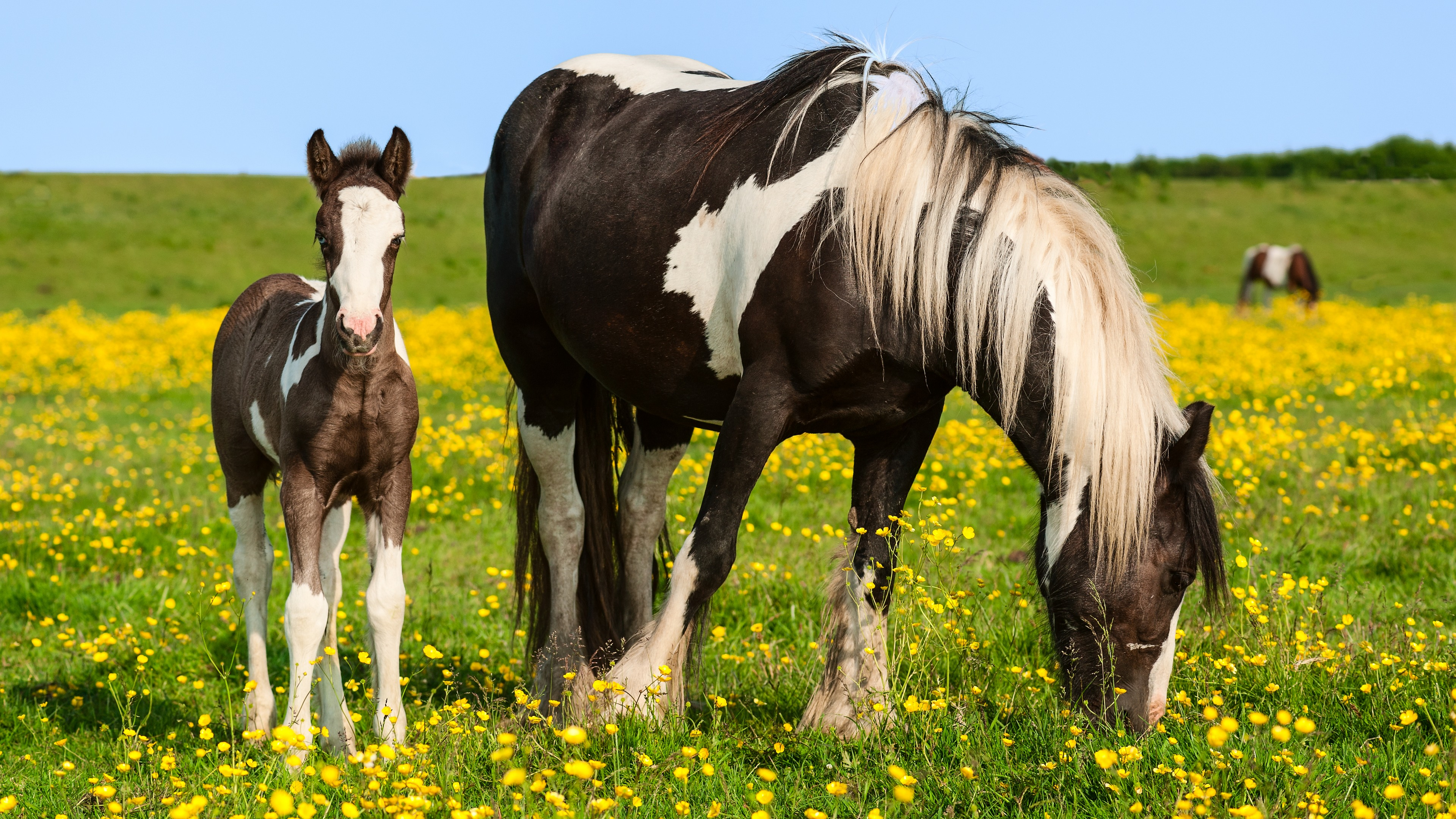 Girls Of The Wilds Wallpaper A Horse With Foal In A Field With Flowers