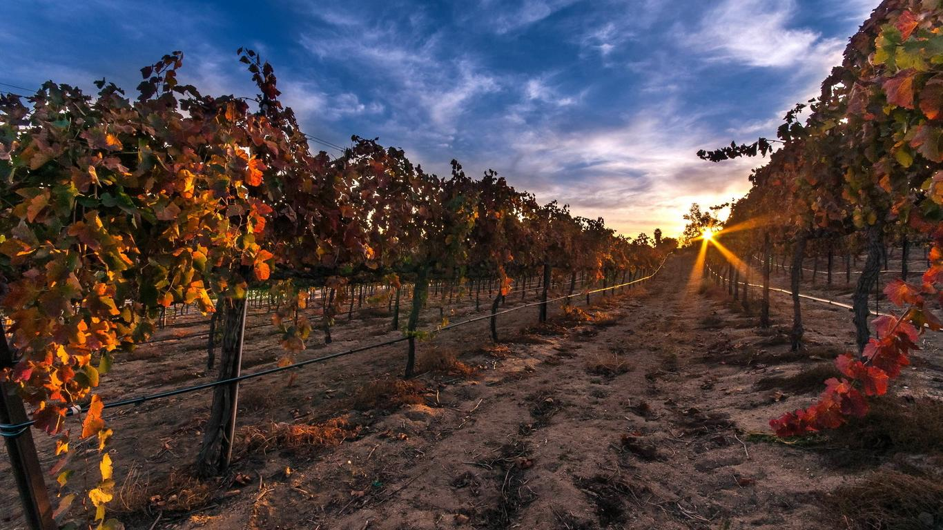Fresh New Fall Hd Wallpapers Autumn Sunset In A Vineyard Wallpaper Download 1366x768