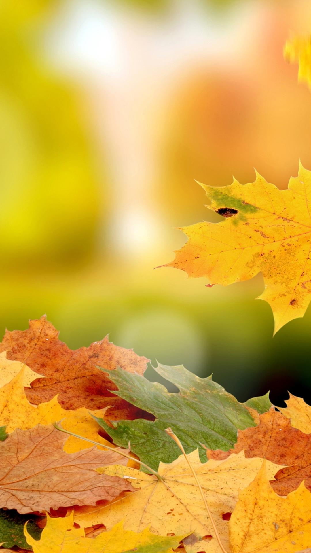 Free Fall Cell Phone Wallpapers Beautiful Carpet Of Autumn Leaves Hd Wallpaper Wallpaper
