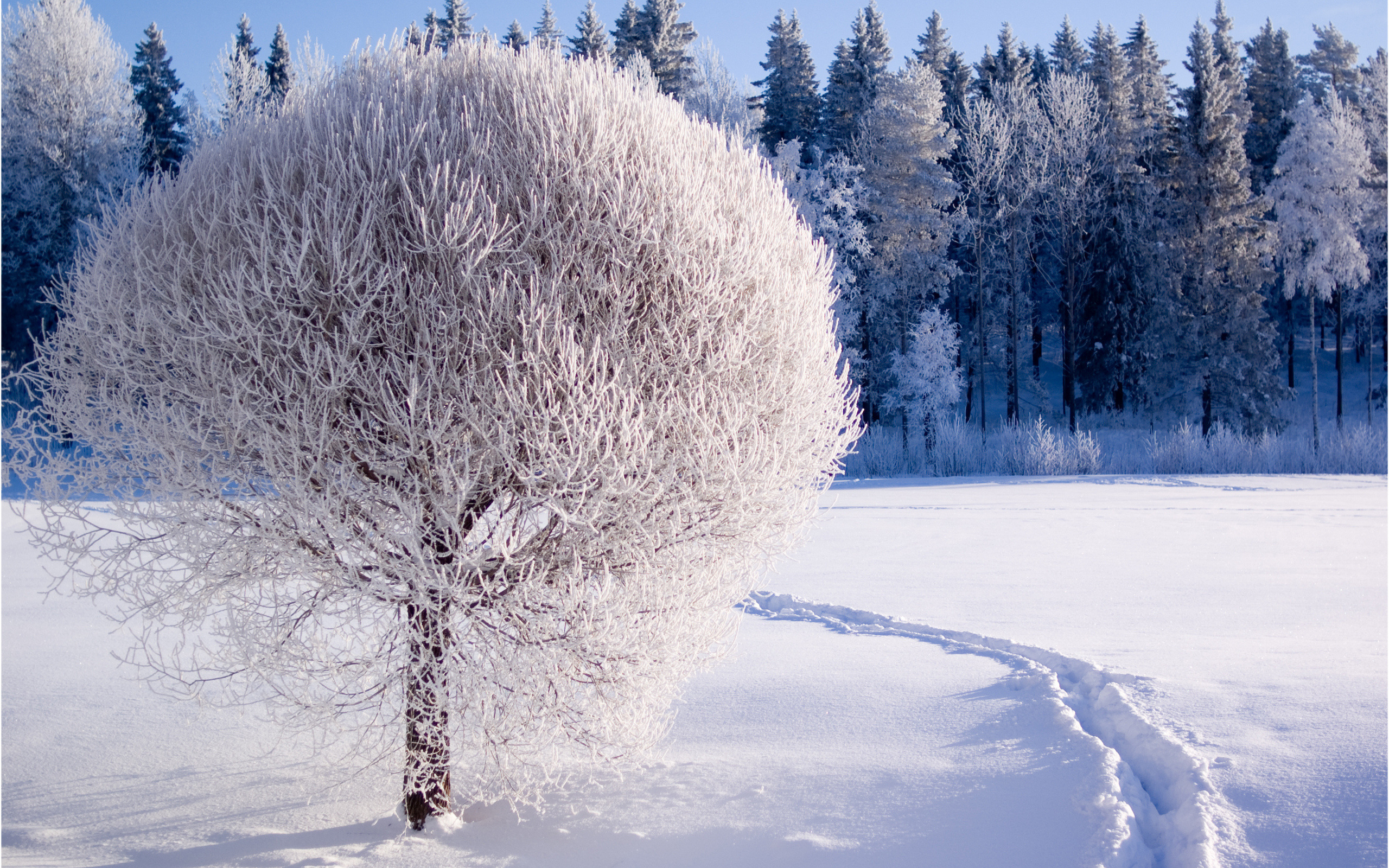 Cars 2 Cartoon Wallpaper Beautiful White Frozen Tree Hd Winter Season
