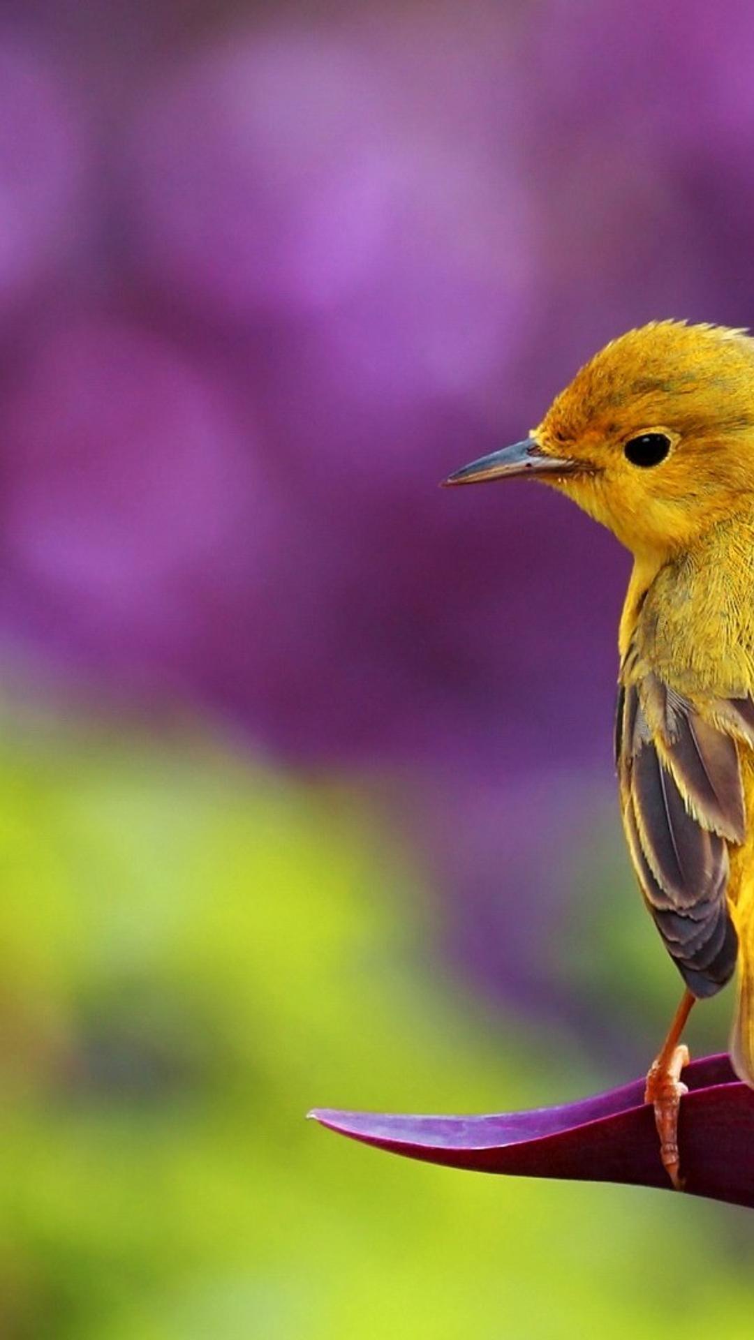 Cute Cartoon Bird Wallpapers Beautiful Yellow Bird Hd Spring Wallpaper Wallpaper