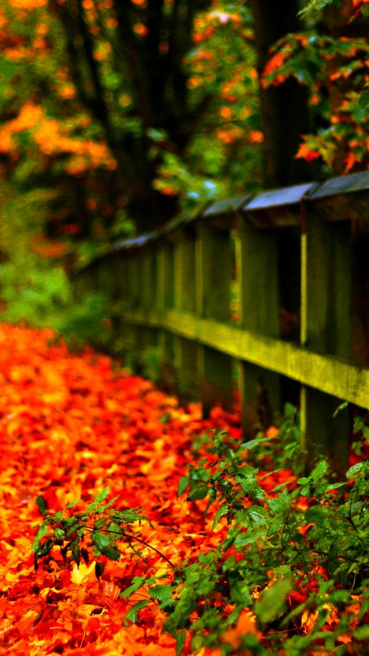 Falling Leaves Wallpaper Screensavers Carpet Of Autumn Leaves In Th Park Hd Wallpaper