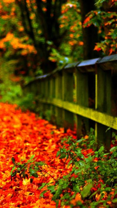 Carpet of autumn leaves in th park - HD wallpaper Wallpaper Download 720x1280