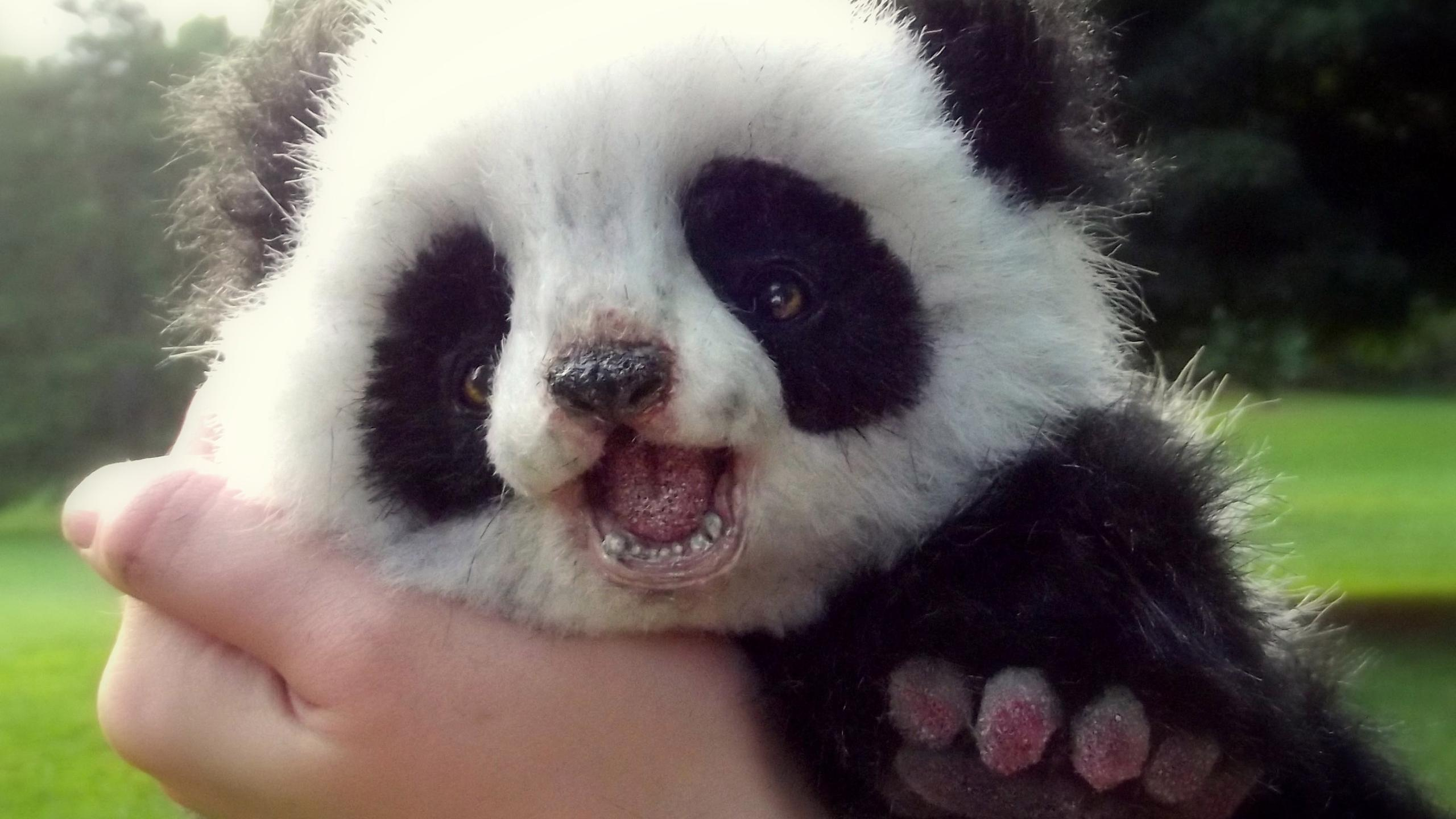 Cute White Dogs Wallpapers Cute Panda Bear Cub Wild Animals Wallpaper Wallpaper