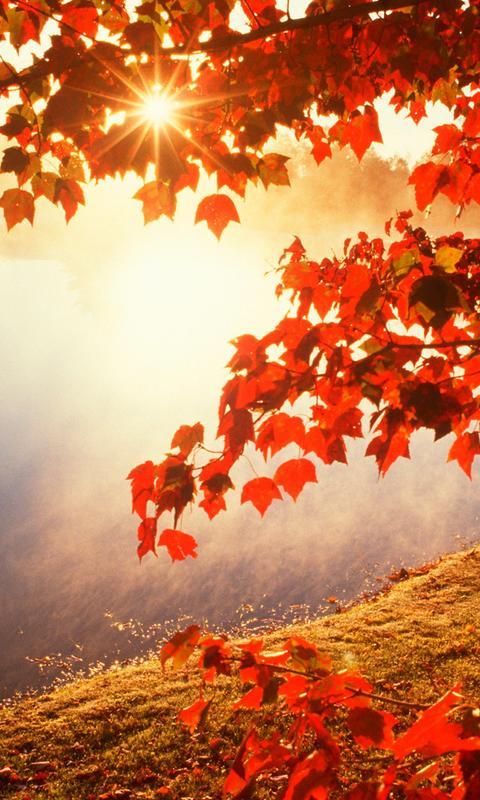 Fall Leaves Computer Wallpaper Good Morning Autumn Sunlight Hd Wallpaper Wallpaper