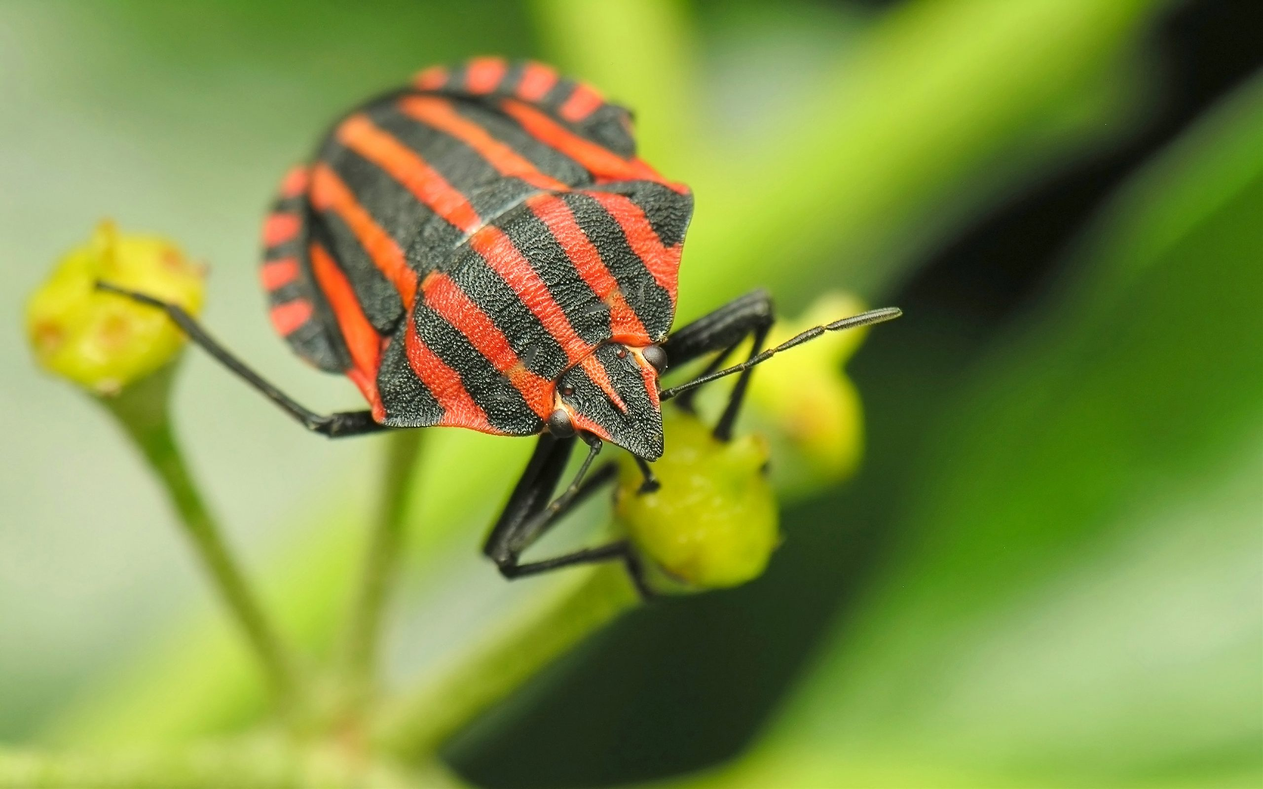 3d Dragon Eye Wallpaper Insect With Orange And Black Striped