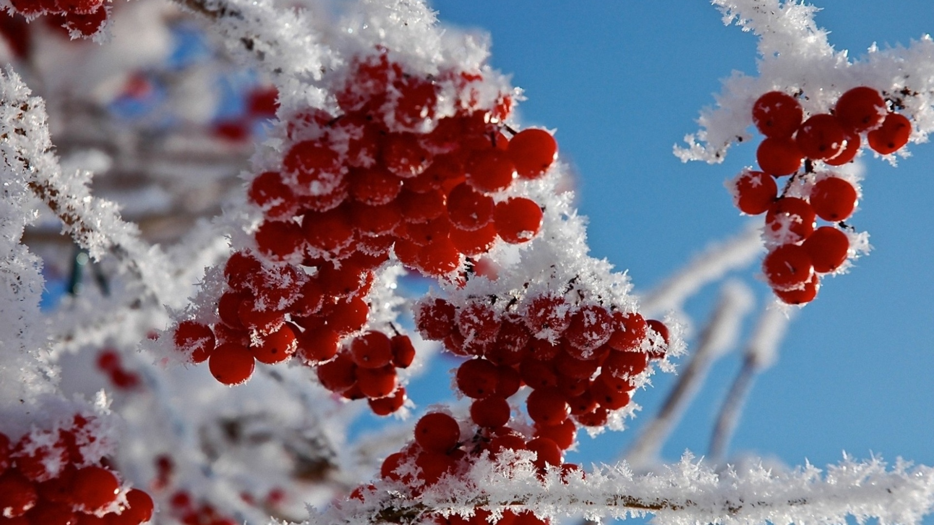 Cute 3d Cartoon Wallpapers Red Frozen Fruits Cold Winter Time For Nature