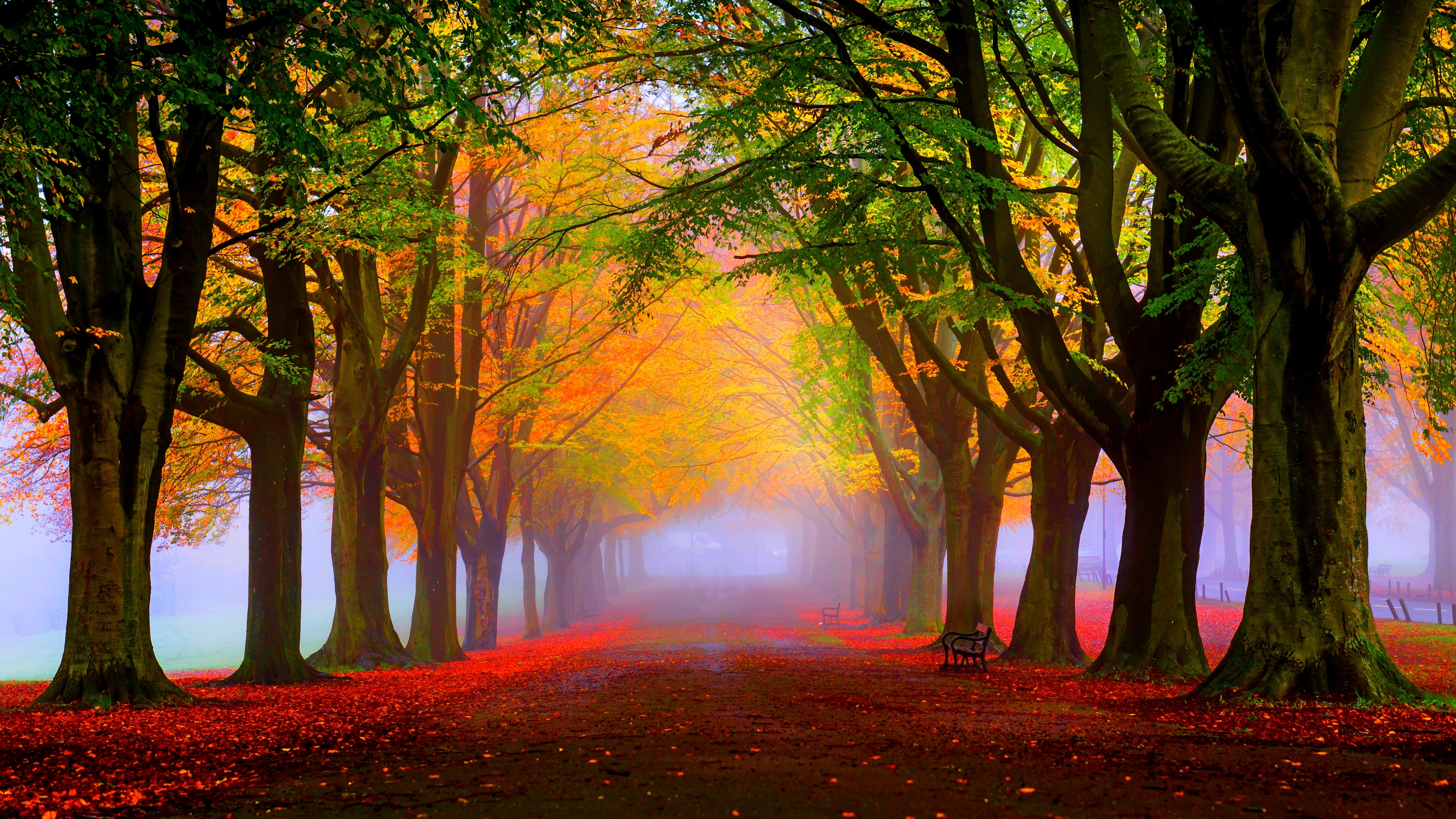 Mercedes New Cars Hd Wallpapers Red Leaves And Fog In The Park Autumn Landscape