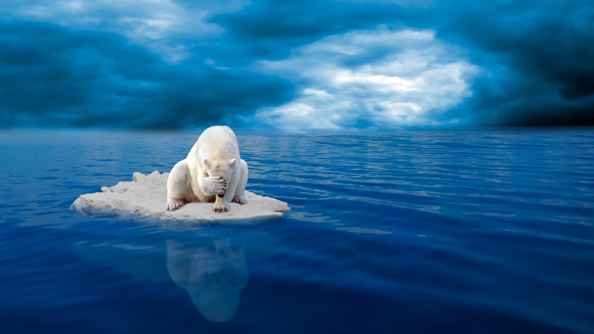 Girls Of The Wilds Wallpaper Sad Polar Bear On Ice In The Middle Of Sea