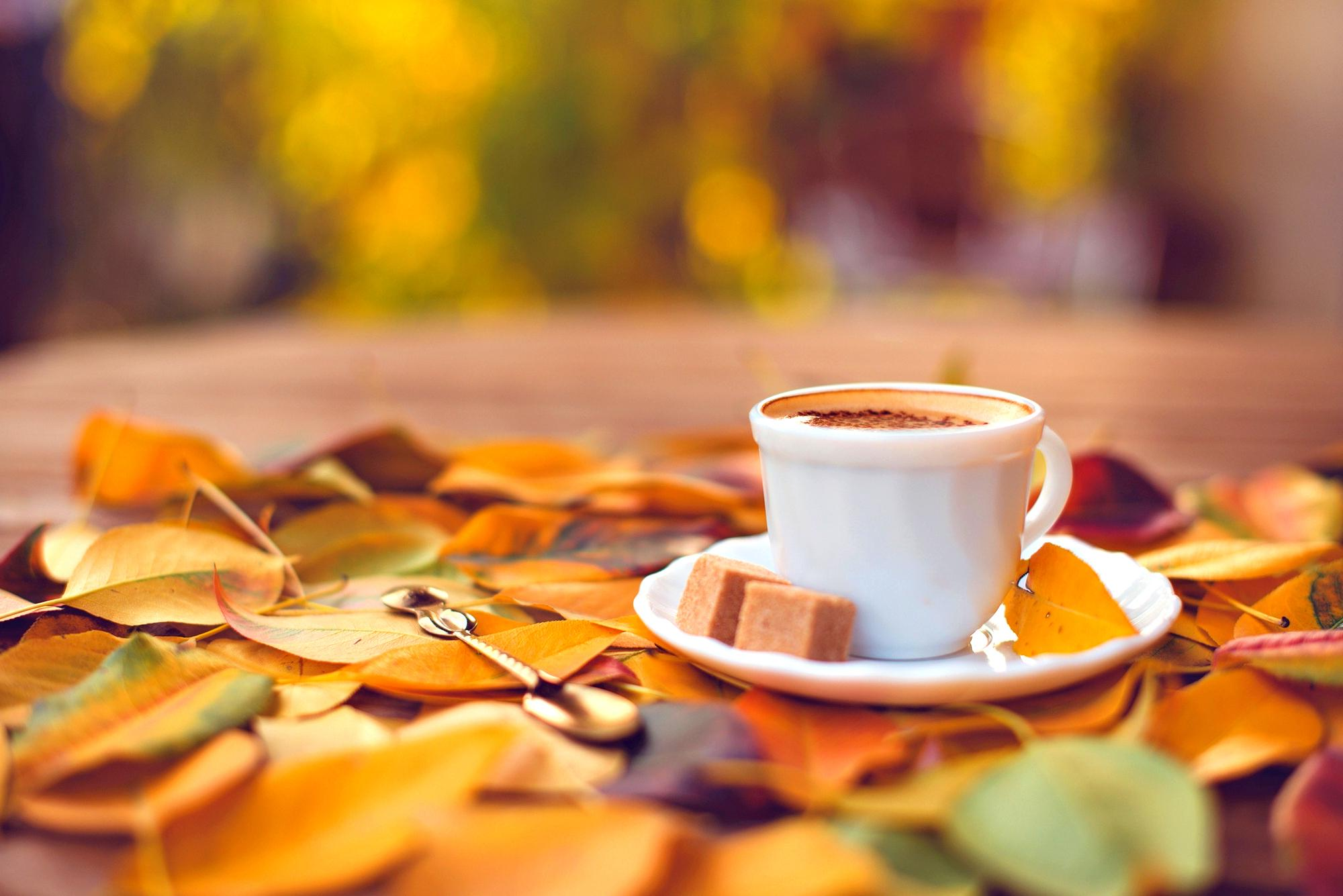 Falling Leaves Wallpaper For Iphone Sweet Coffee And An Autumn Carpet Hd Wallpaper