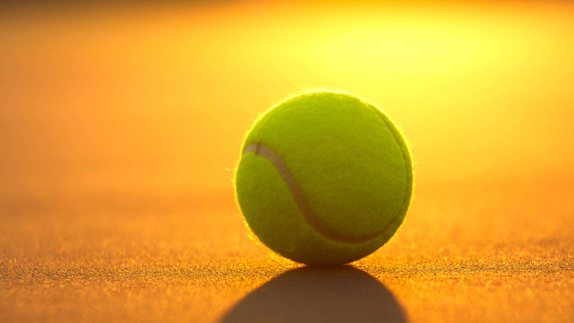 Cute Cats And Dogs Hd Wallpapers Tennis Ball Sport Hd Wallpaper