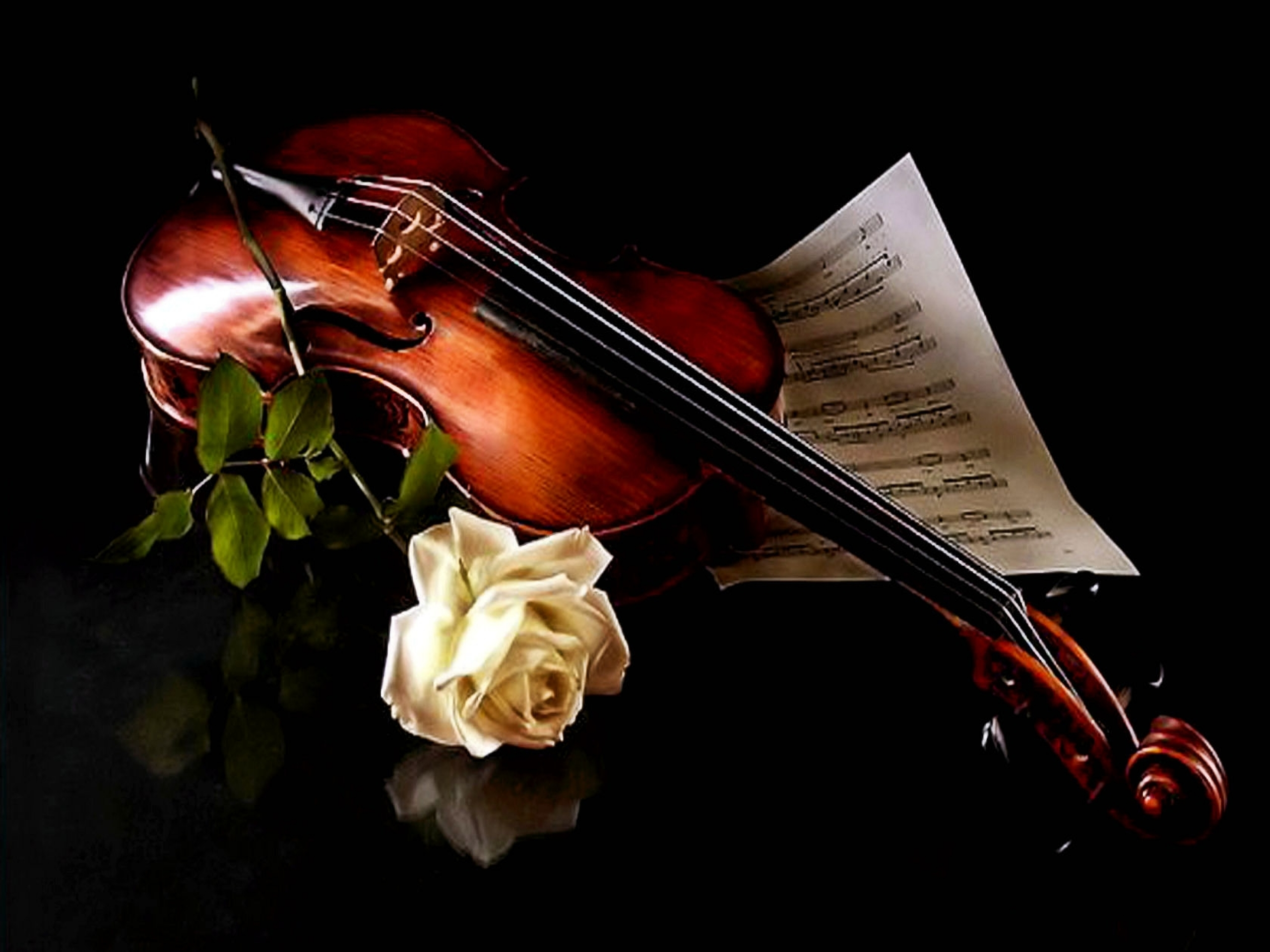 Beautiful Chinese Girl Paintings Widescreen Wallpaper The Music Of Violin And A Beautiful White Rose