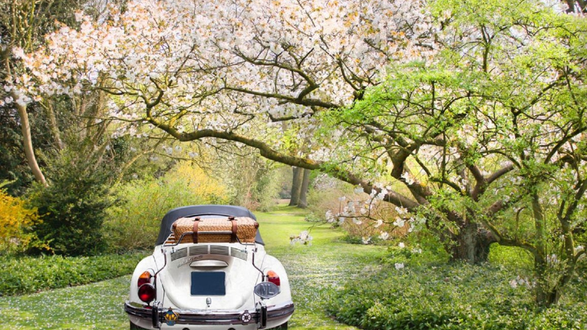 Girls Of The Wilds Wallpaper Walking In The Forest With The Car Spring Season