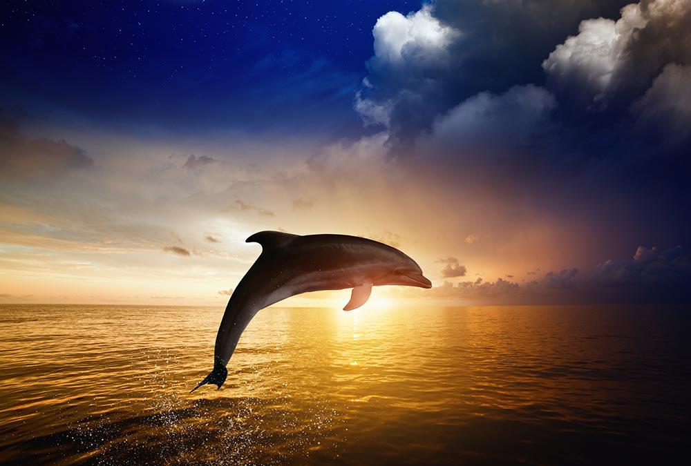 Cute Baby Dolphin Wallpaper Tiermotive Natur Amp Landschaft Supertapete Com