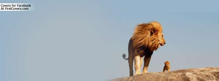 Cute Lion King Wallpaper Real Life Lion King Cover Hd Wallpapers
