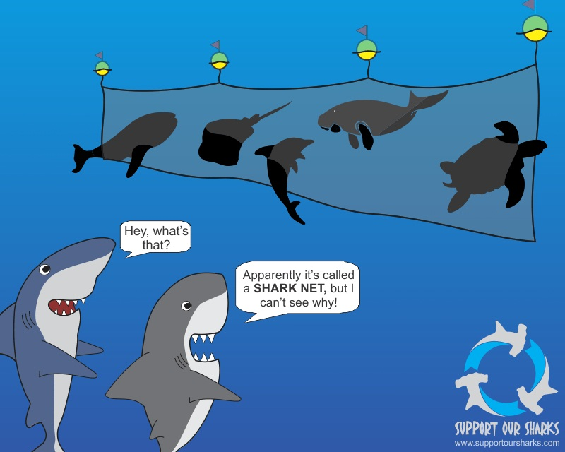 Cute Baby Girl Photos Wallpapers Apparently It S A Shark Net Shark Cartoons By Support