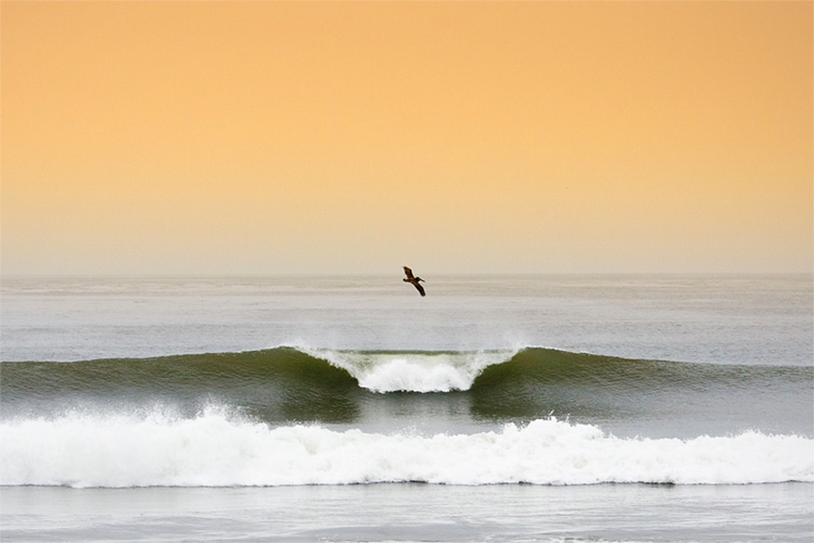 Consistency Quotes Wallpaper Surfing Lower Trestles The Jewel Of Southern California
