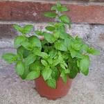 garden-pot